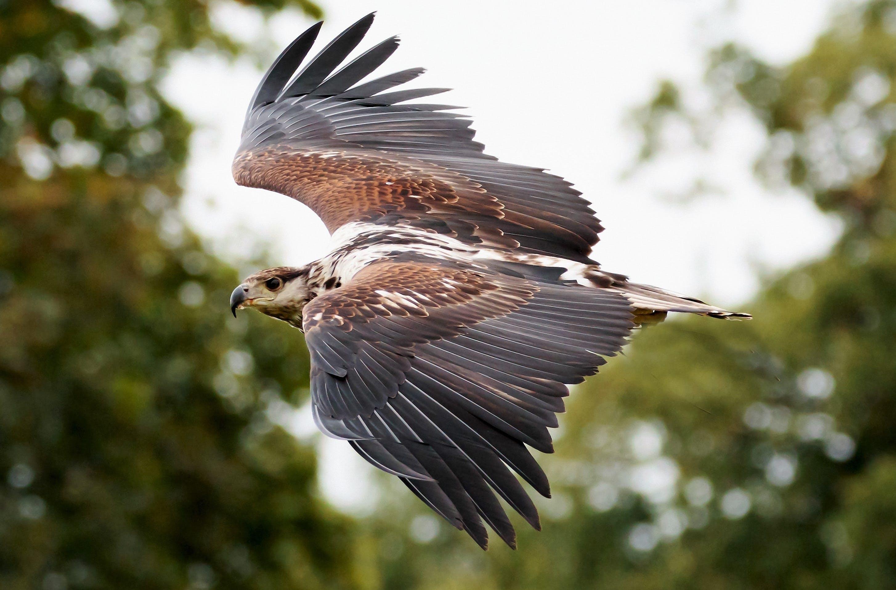 Foto profissional grátis de animais selvagens, animal, asas, borrão