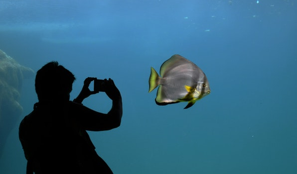 Free stock photo of silhouette, contrast, aquarium, bat fish