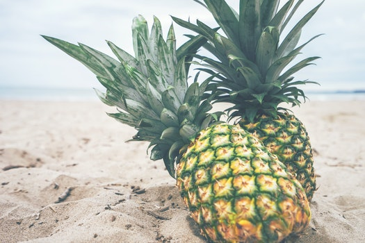 Free stock photo of beach, sand, fruits, seashore