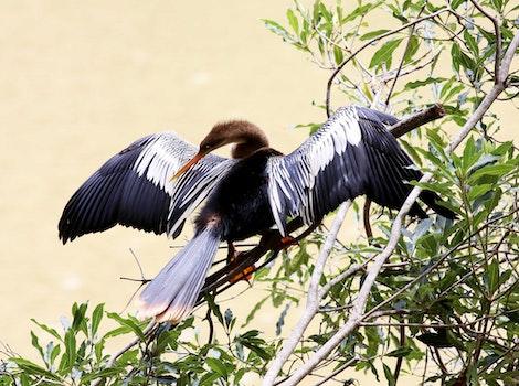Free stock photo of bird, sunbathing, penguin, on the branch