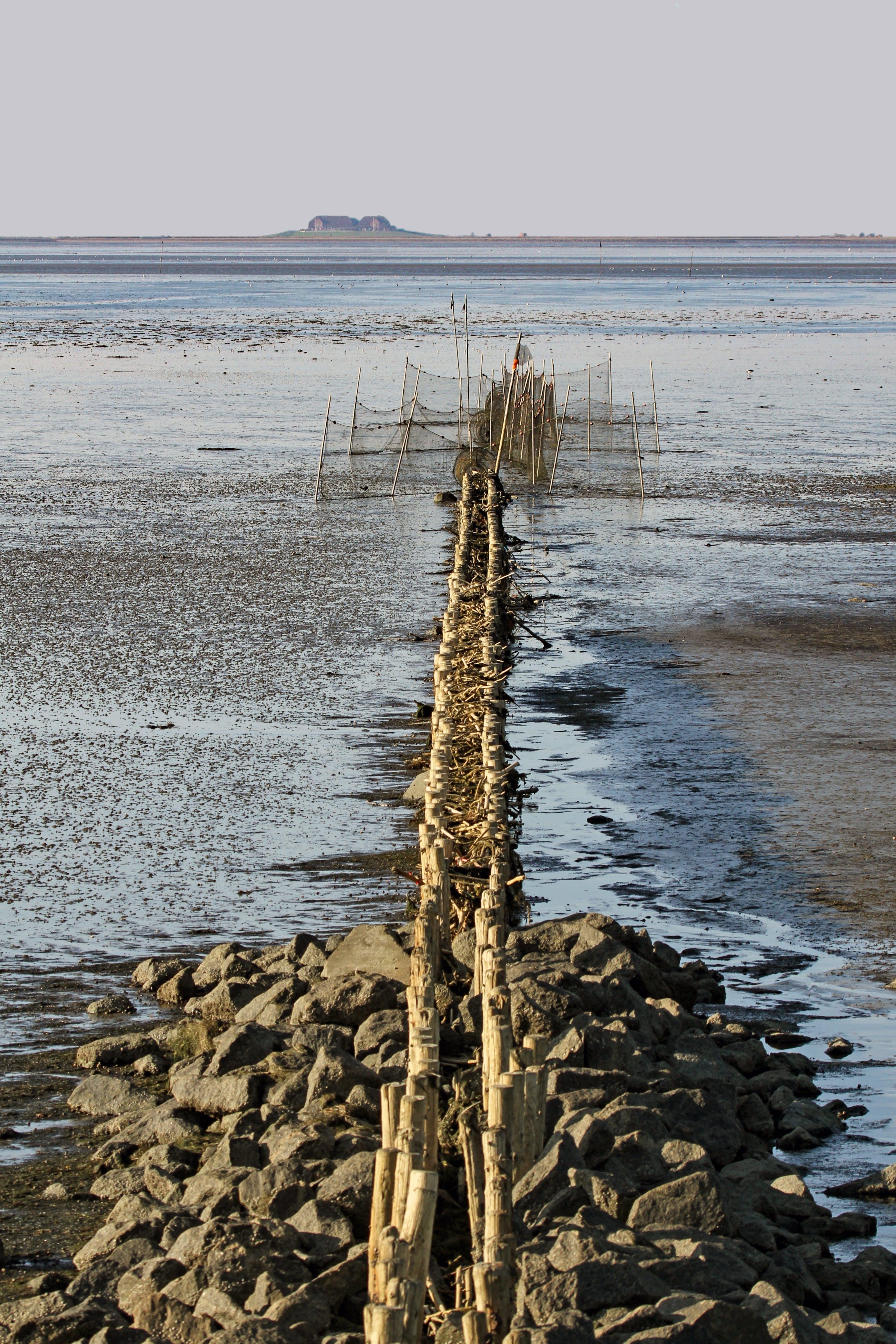 Free stock photo of fishing, coast, fish, North Sea