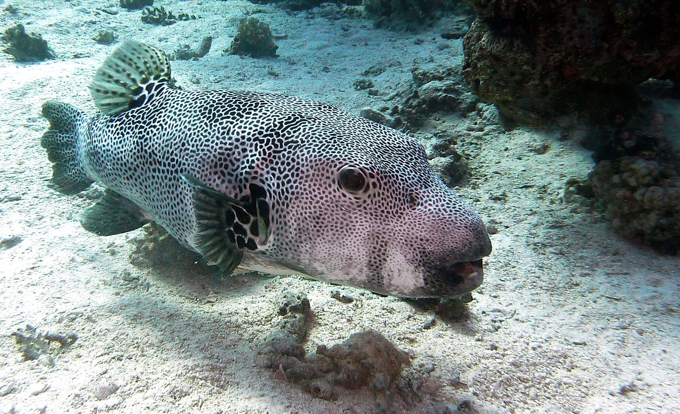 Free stock photo of water, fish, underwater, diving