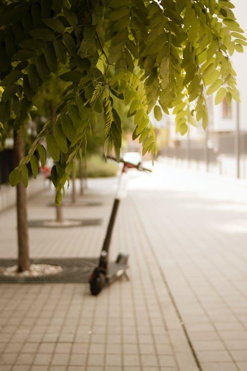 Δωρεάν στοκ φωτογραφιών με αστικός, δέντρο, καλοκαίρι, πόλη
