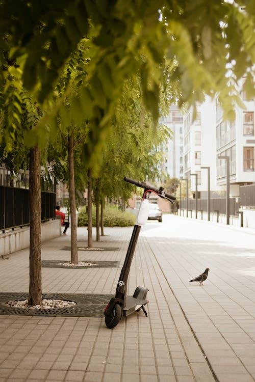 Immagine gratuita di alberi, città, elettrico, estate