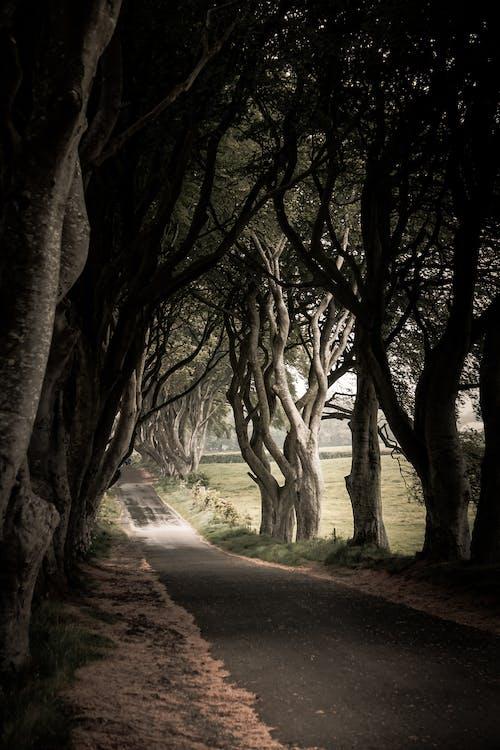 Immagine gratuita di alba, alberi, asfalto, campo