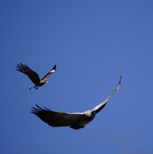 Photos gratuites de oiseaux