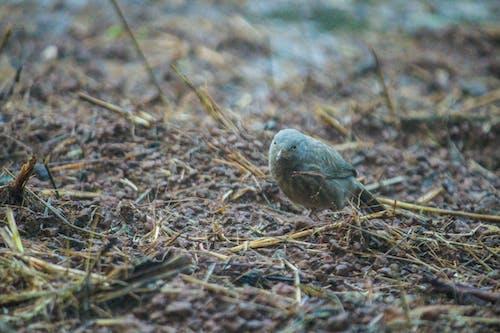 Free stock photo of after the rain, bird feeder, birds