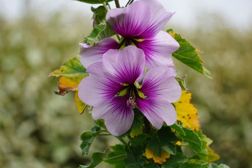 floraison, ジャルダン, ハイビスカス, フルールの無料の写真素材
