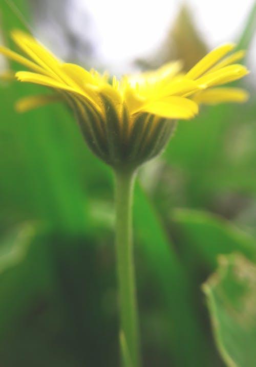 Безкоштовне стокове фото на тему «прекрасна квітка»