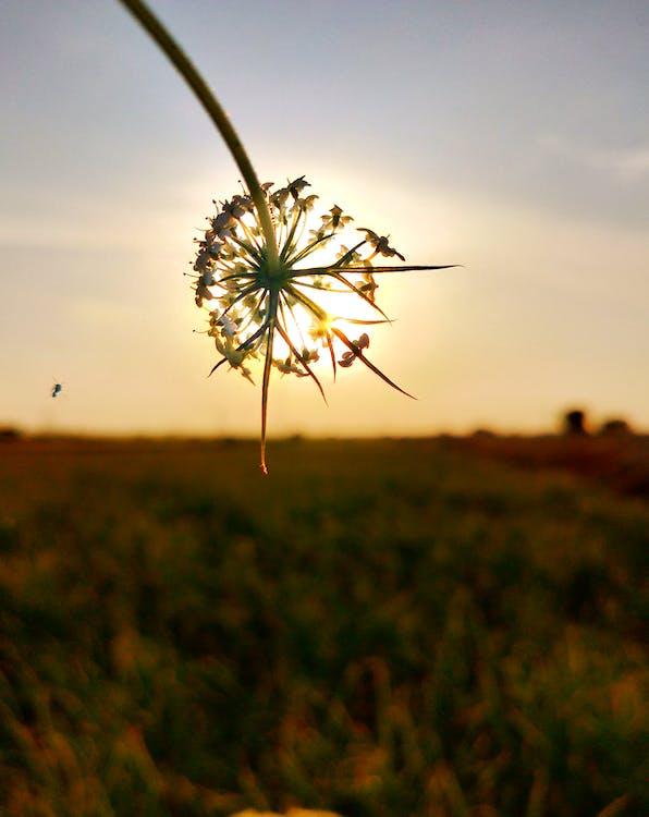 一縷陽光, 天性, 太陽 的 免費圖庫相片
