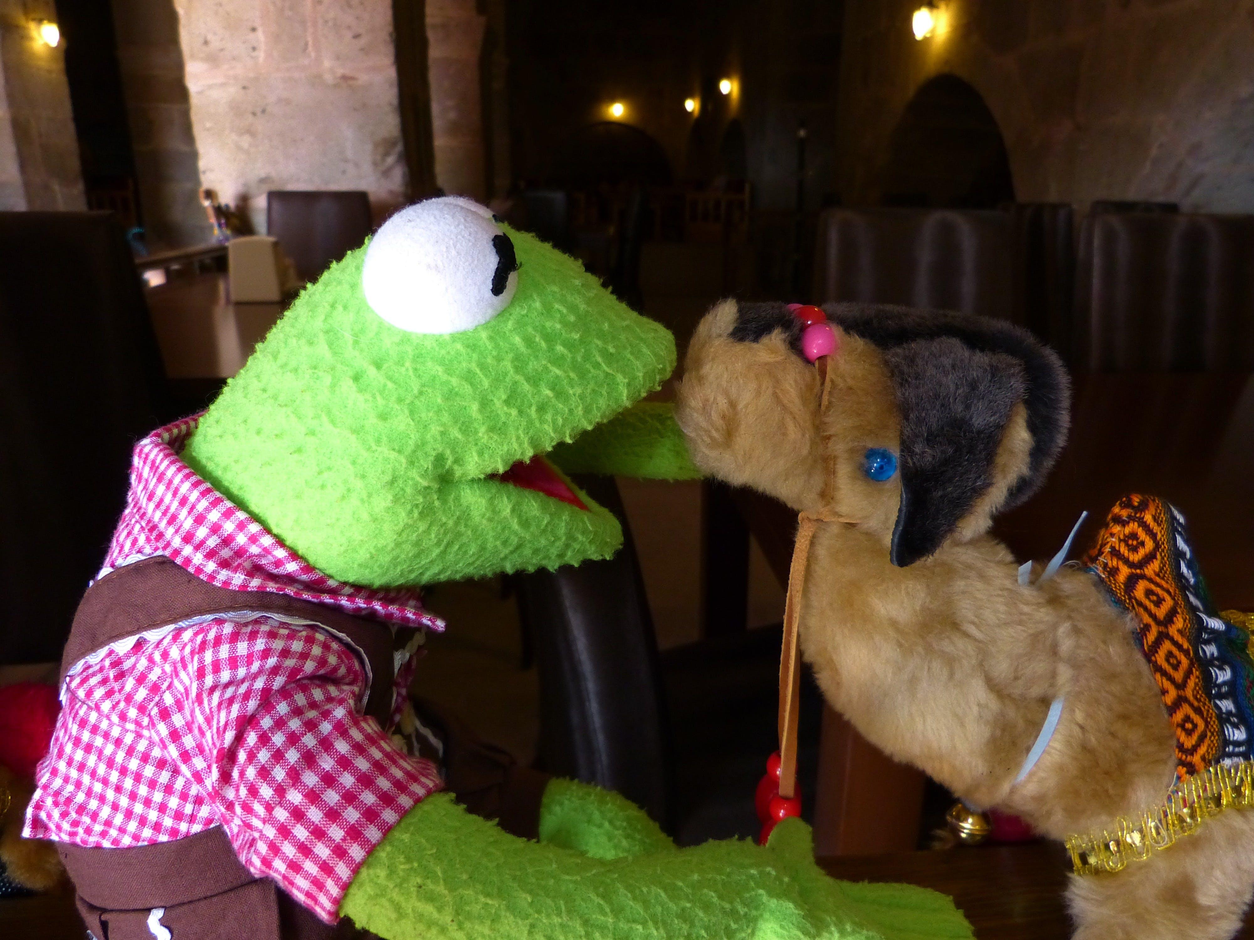 Free stock photo of camel, entertain, frog, green