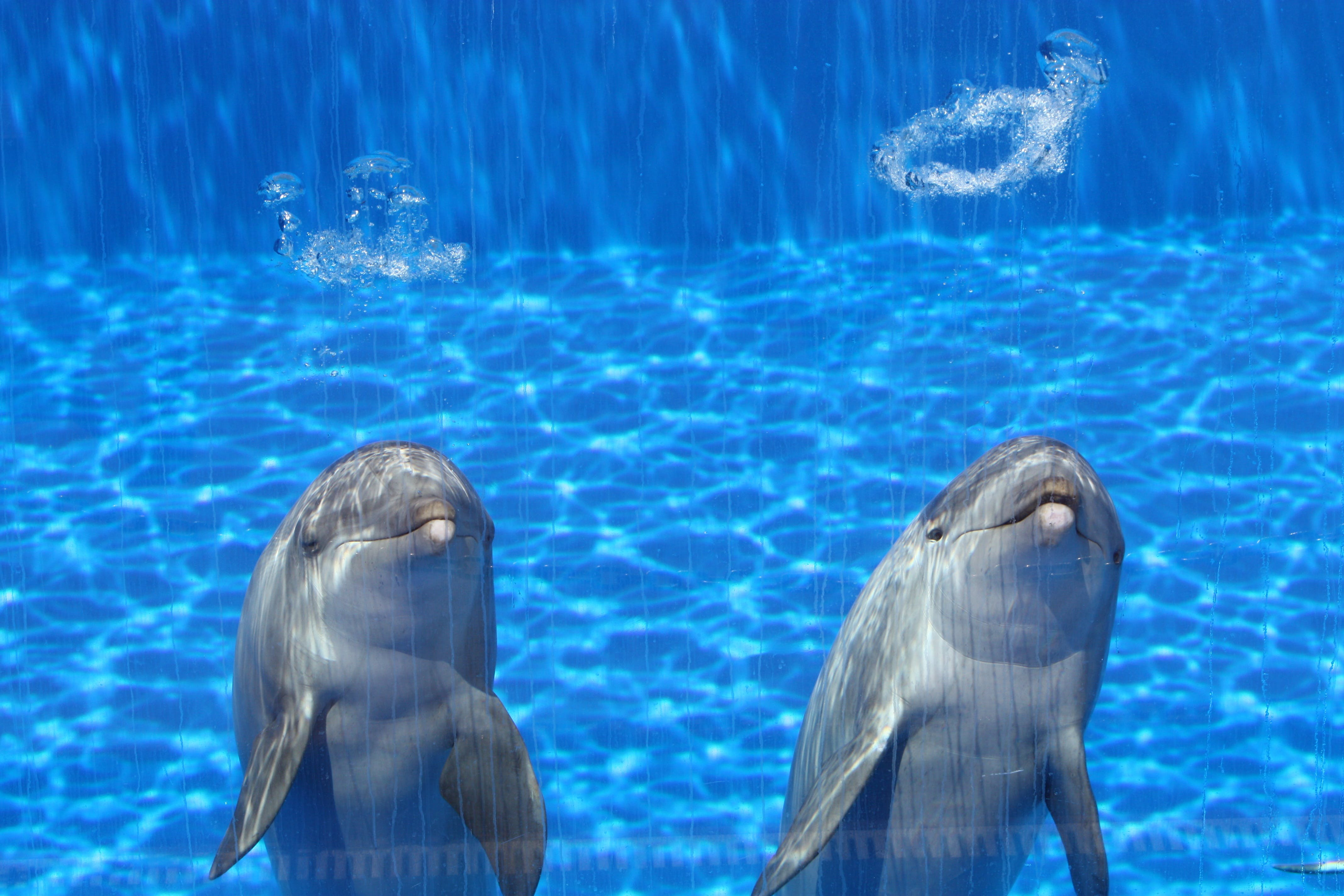 Free stock photo of blue, fish, dolphins, talk