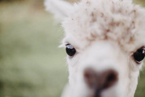 光, 動物, 可愛, 可愛的 的 免费素材照片