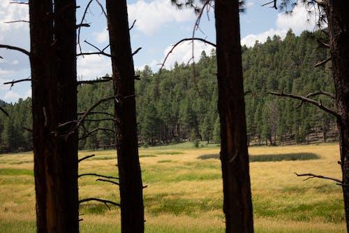 açık hava, ahşap arka plan, uzun ağaçlar içeren Ücretsiz stok fotoğraf
