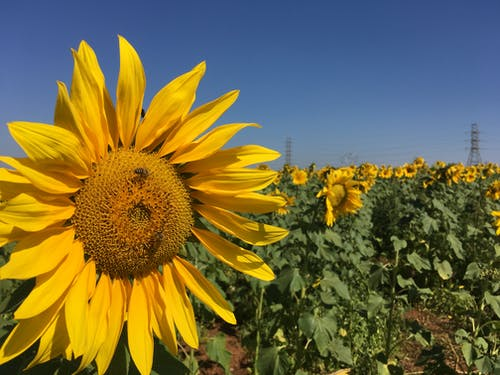 Gratis lagerfoto af blomster, gul, gul baggrund, have