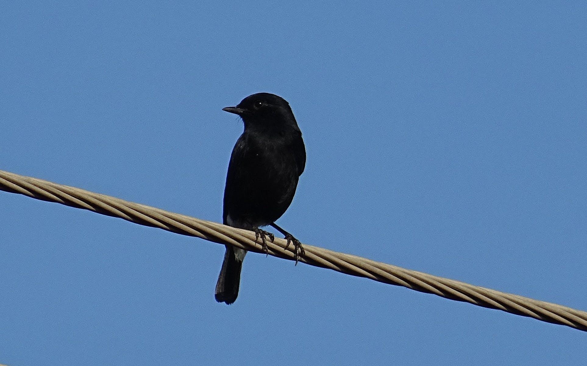 Free stock photo of bird, wild, india, male