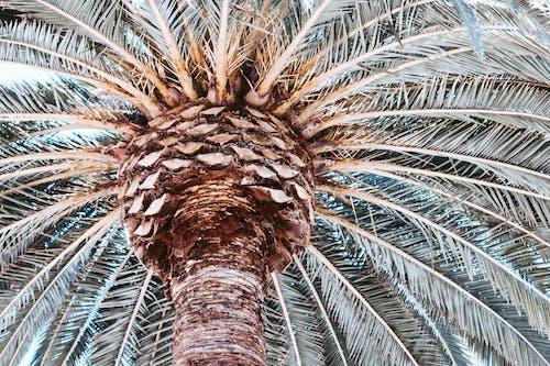 Palmiye ağaçları, palmiye yaprağı, Palmiye yaprakları içeren Ücretsiz stok fotoğraf