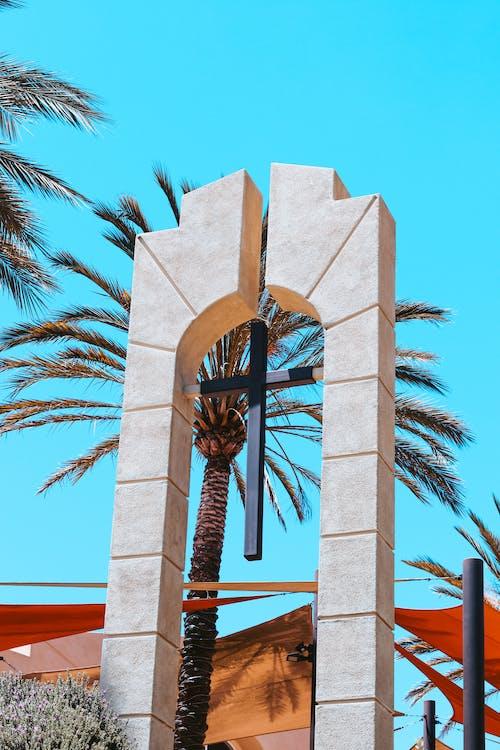 çarpı, mavi, Palmiye, Palmiye ağaçları içeren Ücretsiz stok fotoğraf