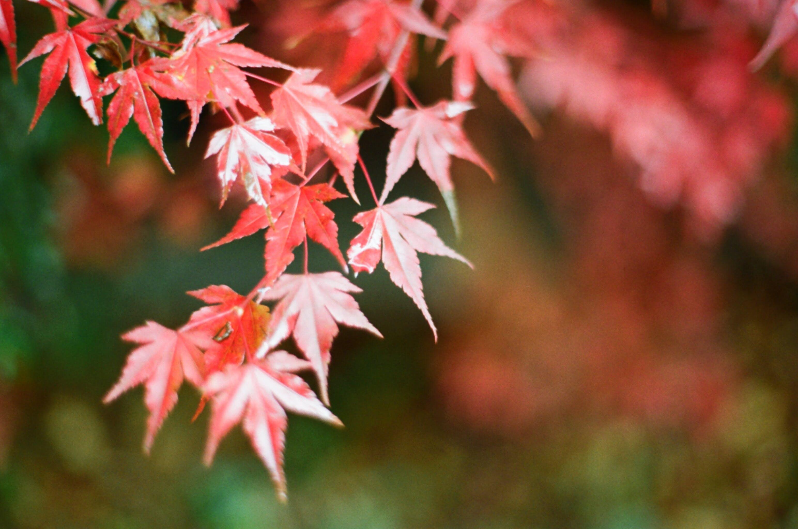 Free stock photo of autumn, autumn leaves, calendar, leaves