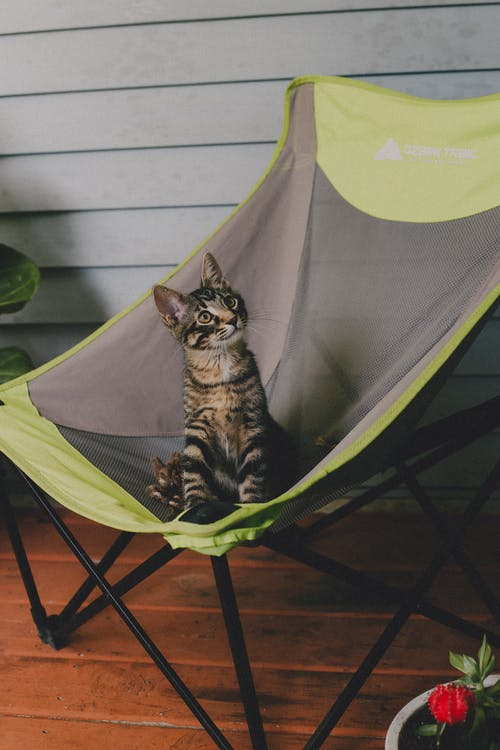 Free stock photo of cat, kitten, outdoor