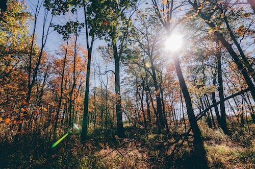 คลังภาพถ่ายฟรี ของ ชิลล์, ดวงอาทิตย์, ตก, ต้นไม้
