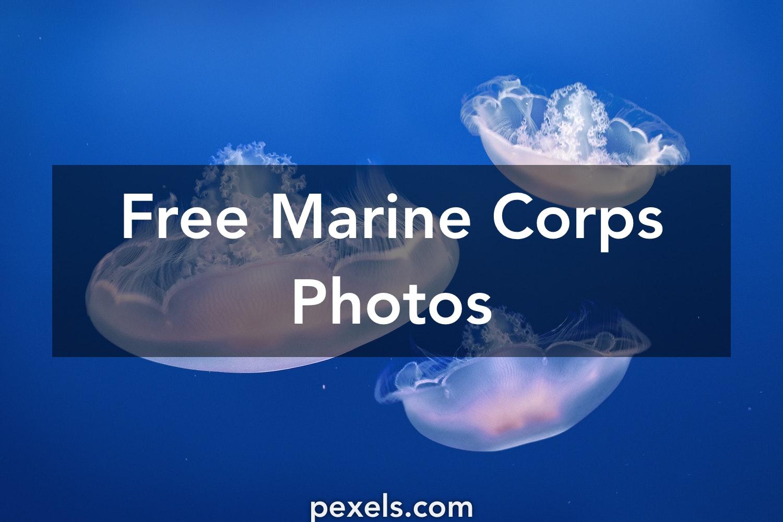 250 Beautiful Religious Photos Pexels Free Stock Photos: 250+ Beautiful Marine Corps Photos · Pexels · Free Stock