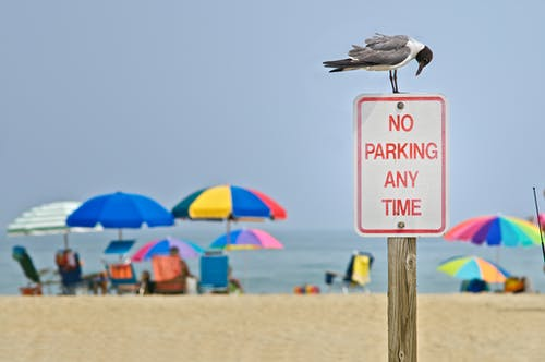 Бесплатное стоковое фото с лето, морское побережье, пляж, птица