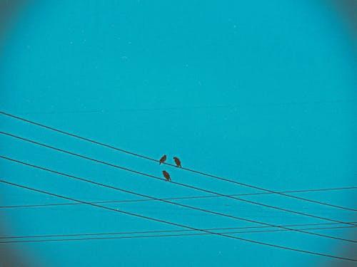 Foto stok gratis biru, burung gereja, burung-burung