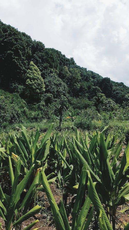 Ảnh lưu trữ miễn phí về cây, Indonesia, màu xanh lá, rừng