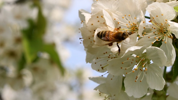 Free stock photo of spring, flower, bee, pollen