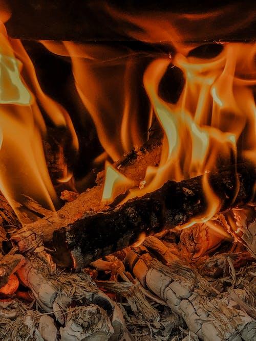 Gratis stockfoto met achtergrond, boom, brand, camping