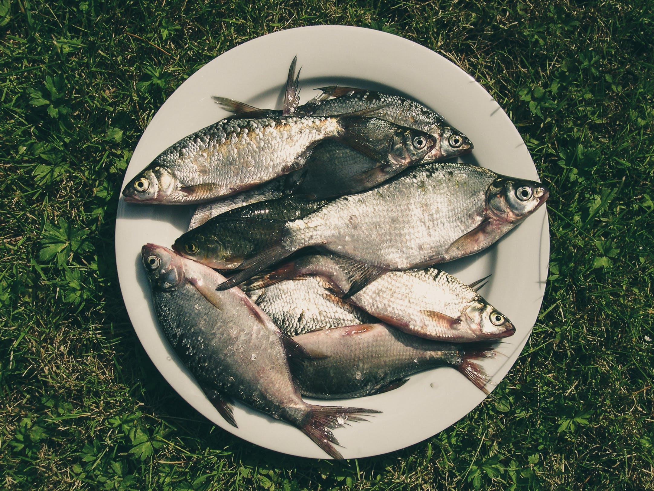 Free stock photo of fish, fishing, food, grass