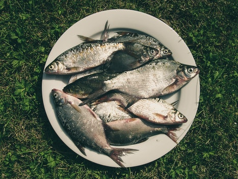 Free stock photo of food, fishing, grass, fish