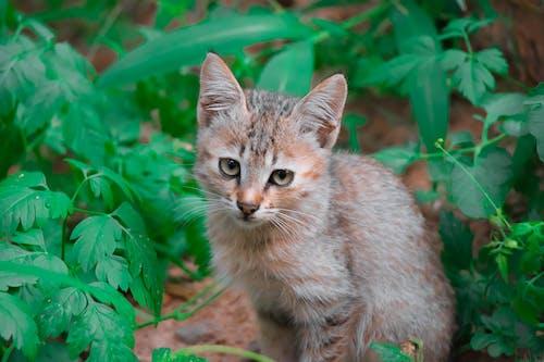 Free stock photo of adorable, among, animal