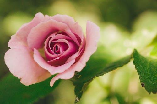 Gratis arkivbilde med blomster, botanisk, hage, landskap