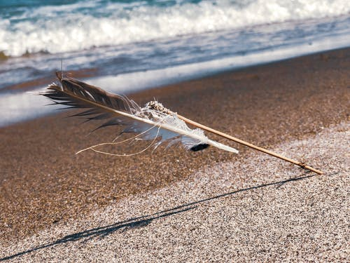 Free stock photo of beach, beauty in nature, feather, feathers
