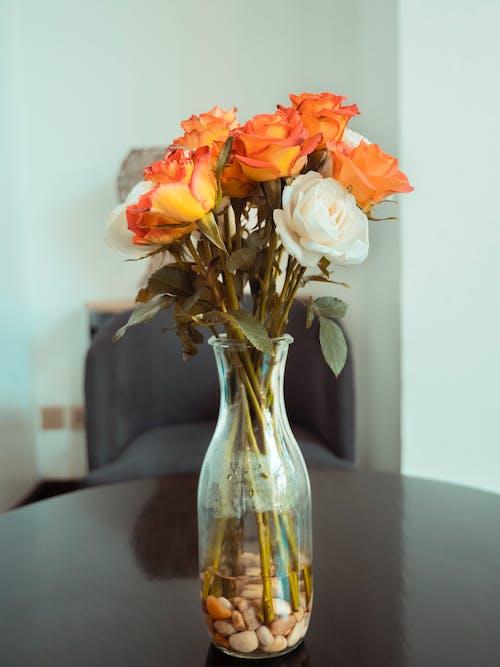 Photos gratuites de accessoires de bureau, magnifiques fleurs