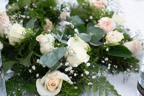 Photos gratuites de belle fleur
