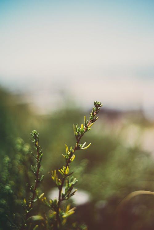 Fotobanka sbezplatnými fotkami na tému prostredie, rastlina, selektívne zaostrenie, zelený list