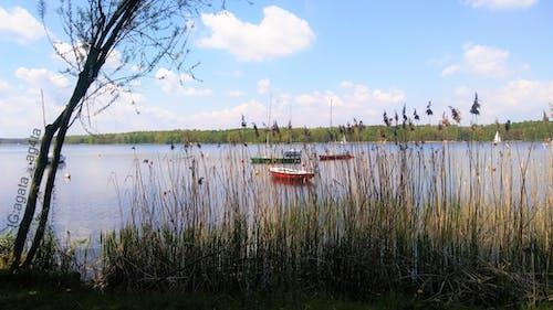 Gratis arkivbilde med båt, båter, enormt gress, eventyr