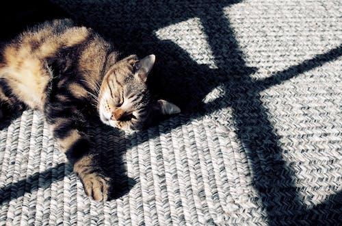 hd, カラフル, ネコ, ペットの無料の写真素材