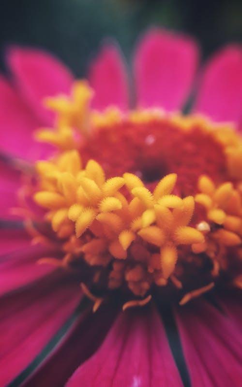 Безкоштовне стокове фото на тему «барвистий, прекрасна квітка»