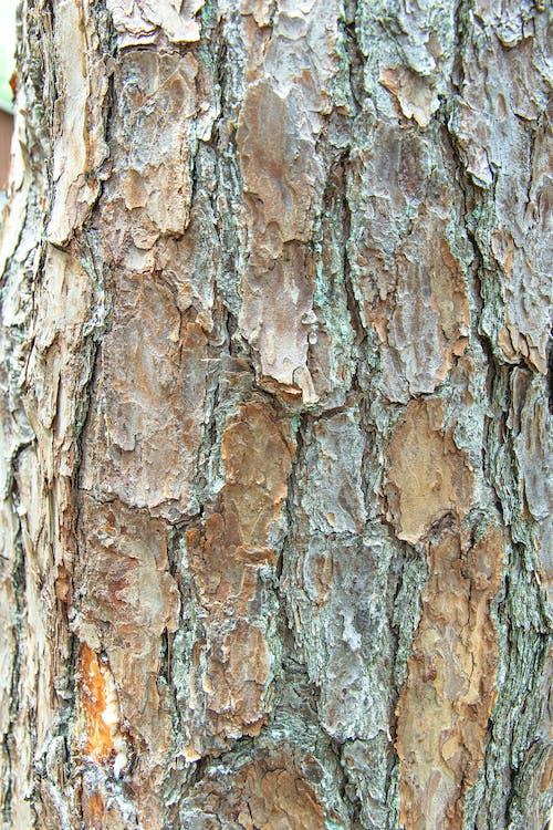 Free stock photo of artistic background, texture, tree bark, tree trunk