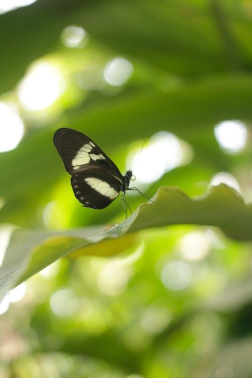 Ảnh lưu trữ miễn phí về Con bướm, con vật, lá, lòng bàn tay