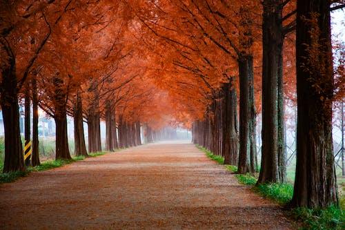 Kostnadsfri bild av 4k tapeter, falla, fredlig, gångväg