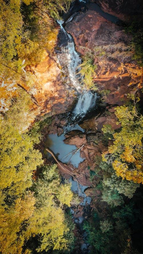Бесплатное стоковое фото с вид с квадрокоптера, вид сверху, деревья, дикая природа