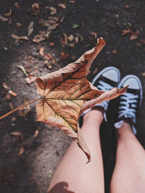 Foto d'estoc gratuïta de calçat, calçat esportiu, cames, caure