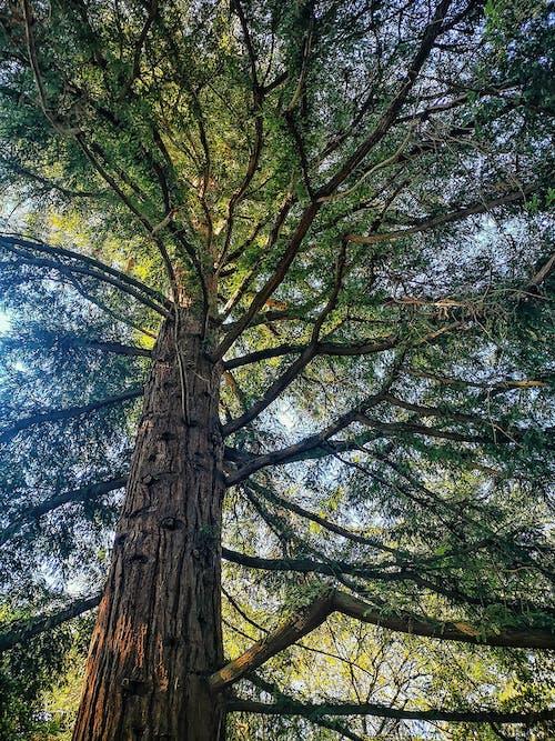 Ingyenes stockfotó barna, élet a természetben, fa, hűvös háttér témában