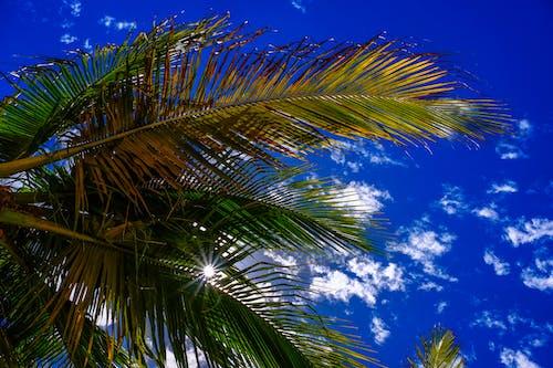 Foto d'estoc gratuïta de arbre, cel, cel blau, llum del sol
