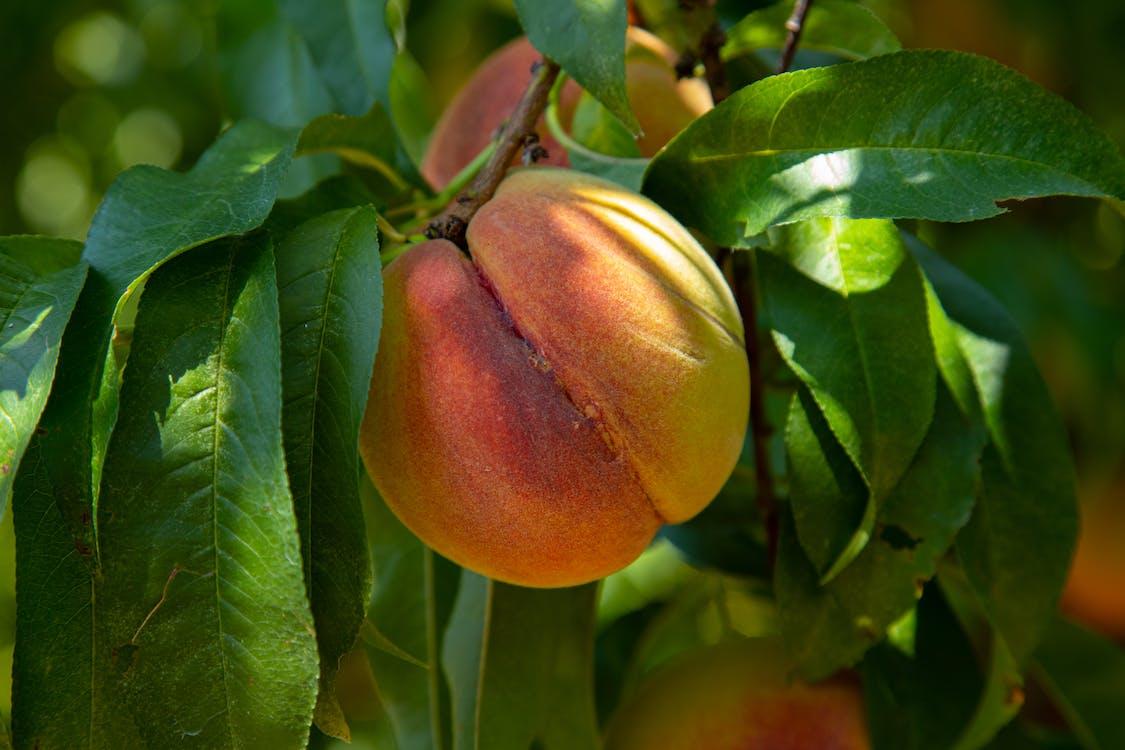 agbiopix, apelsin, lantbruk